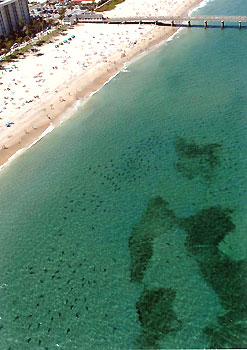 2008 Shark Attack Survivors Advisory For USA Beach Goers