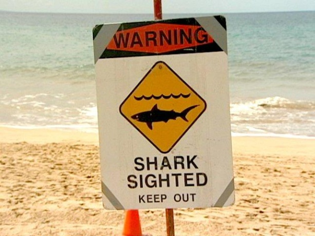Shark Sighted Sign