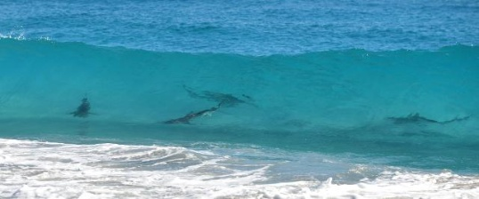 Palm Beach County Florida - Sharks at beach